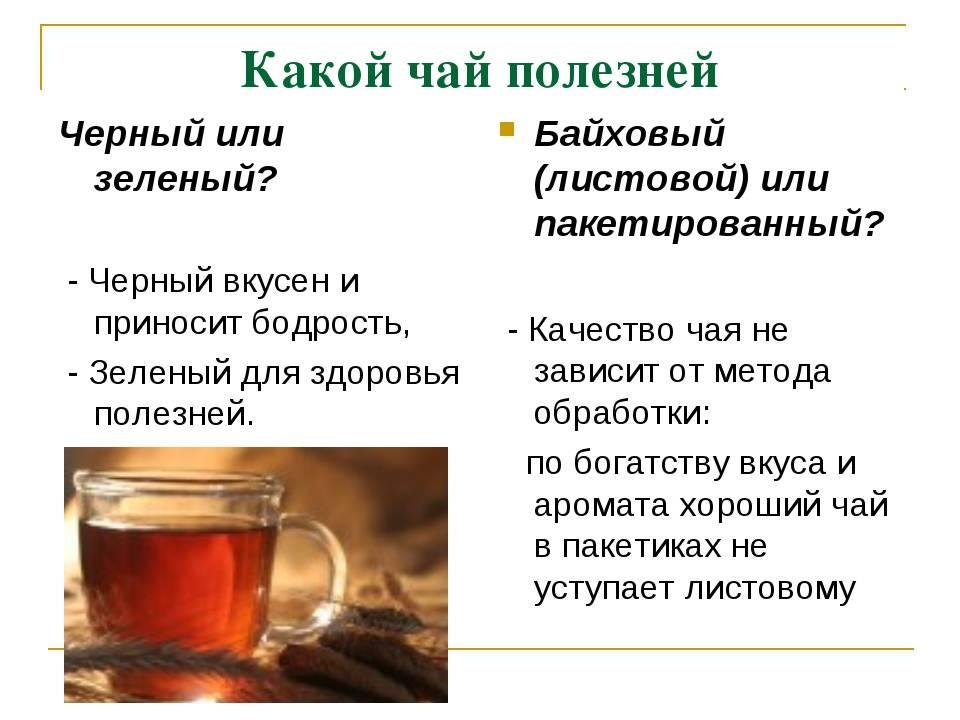 Польза и противопоказания к употреблению зеленого чая