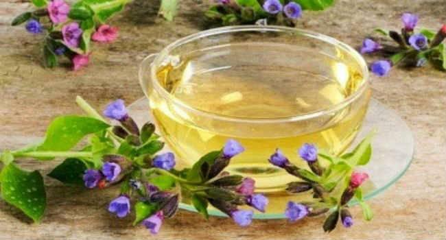 Трава медуница: лечебные свойства и противопоказания, описание, заготовка, способы применения — медиамедик
