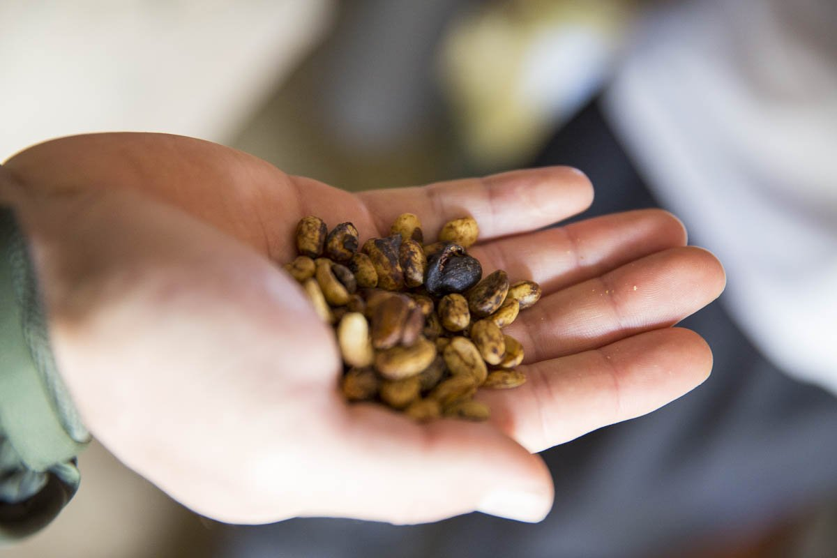 Производство кофе в бразилии: технологии сбора кофейных ягод и процессы их обработки - статьи