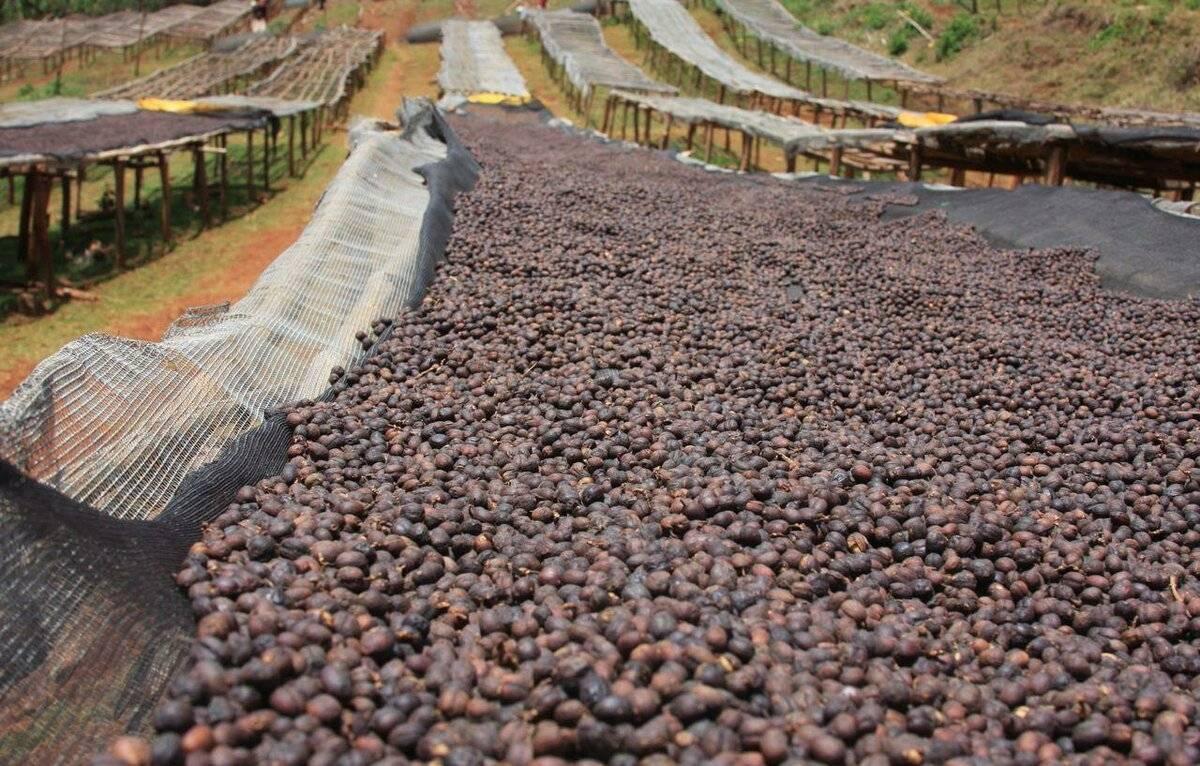 Методы обработки кофейных зерен. мокрая обработка кофе — что это? и чем она отличается от сухой? обжаривание кофейных зерен