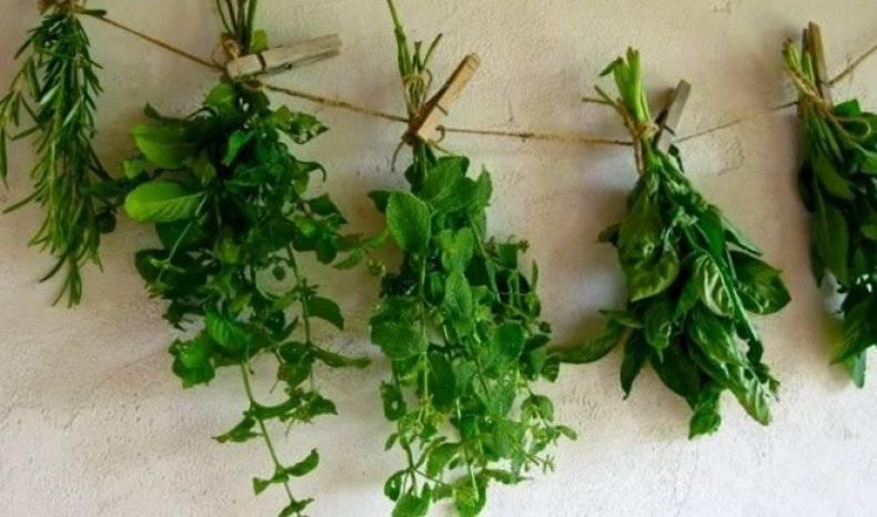 Как сушить мяту? секреты сбора, сушки и хранения ароматной травы