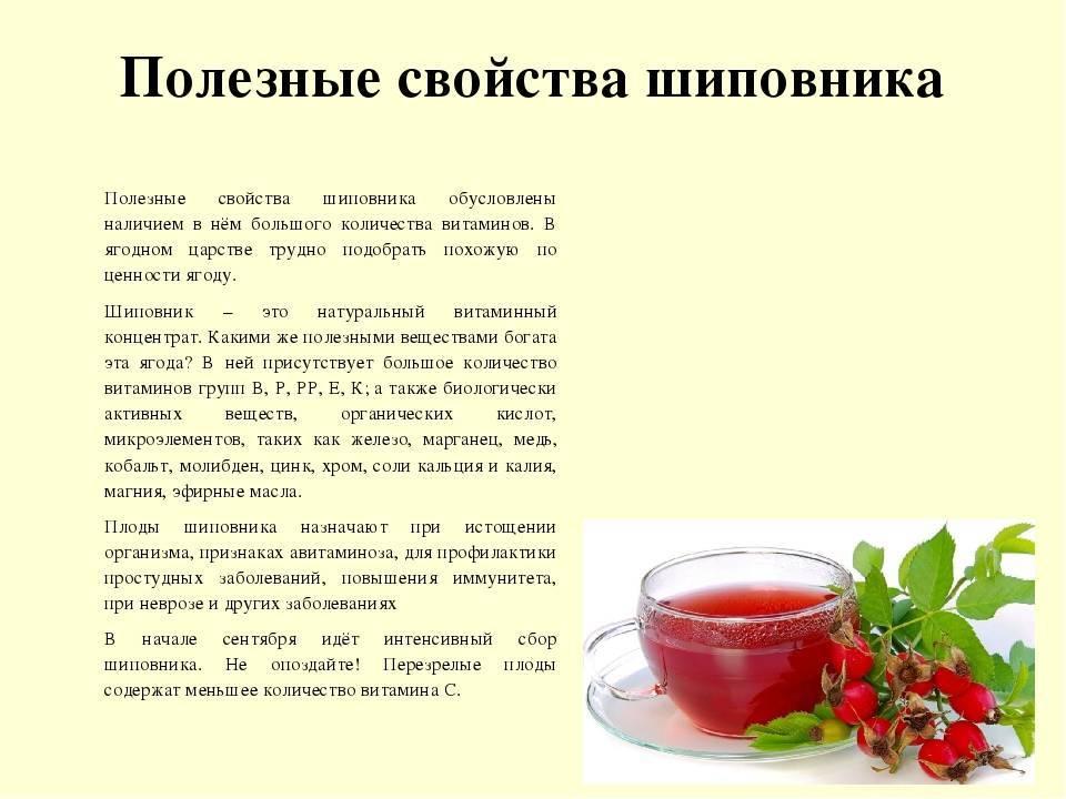 Отвар шиповника: польза и вред для здоровья, как приготовить и принимать в лечебных целях   народная медицина