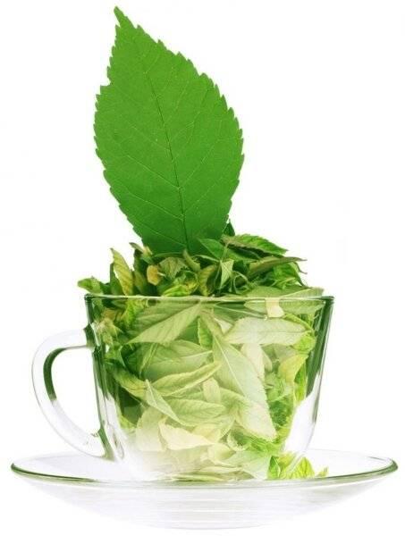 Чай тулси священый базилик - полезные свойства и применение