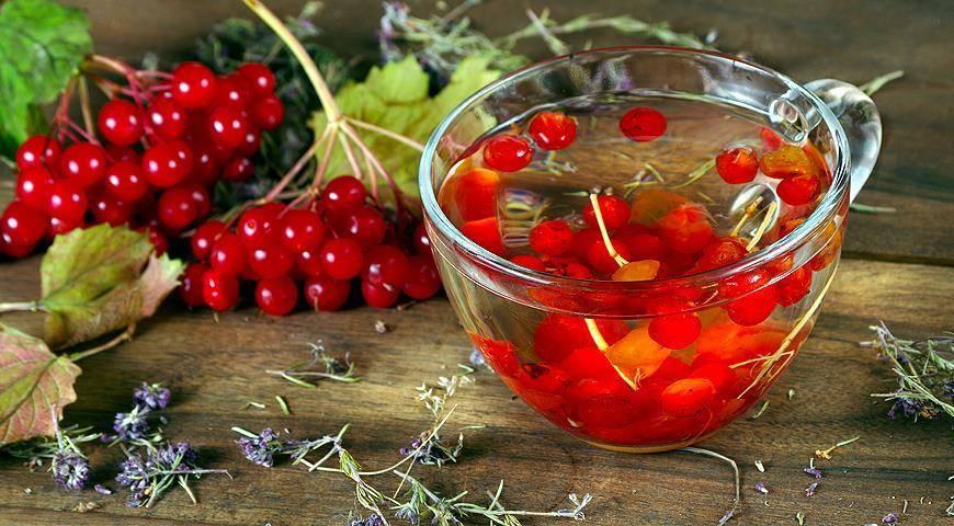 Чай из калины: польза для здоровья, рецепт - целебные травы