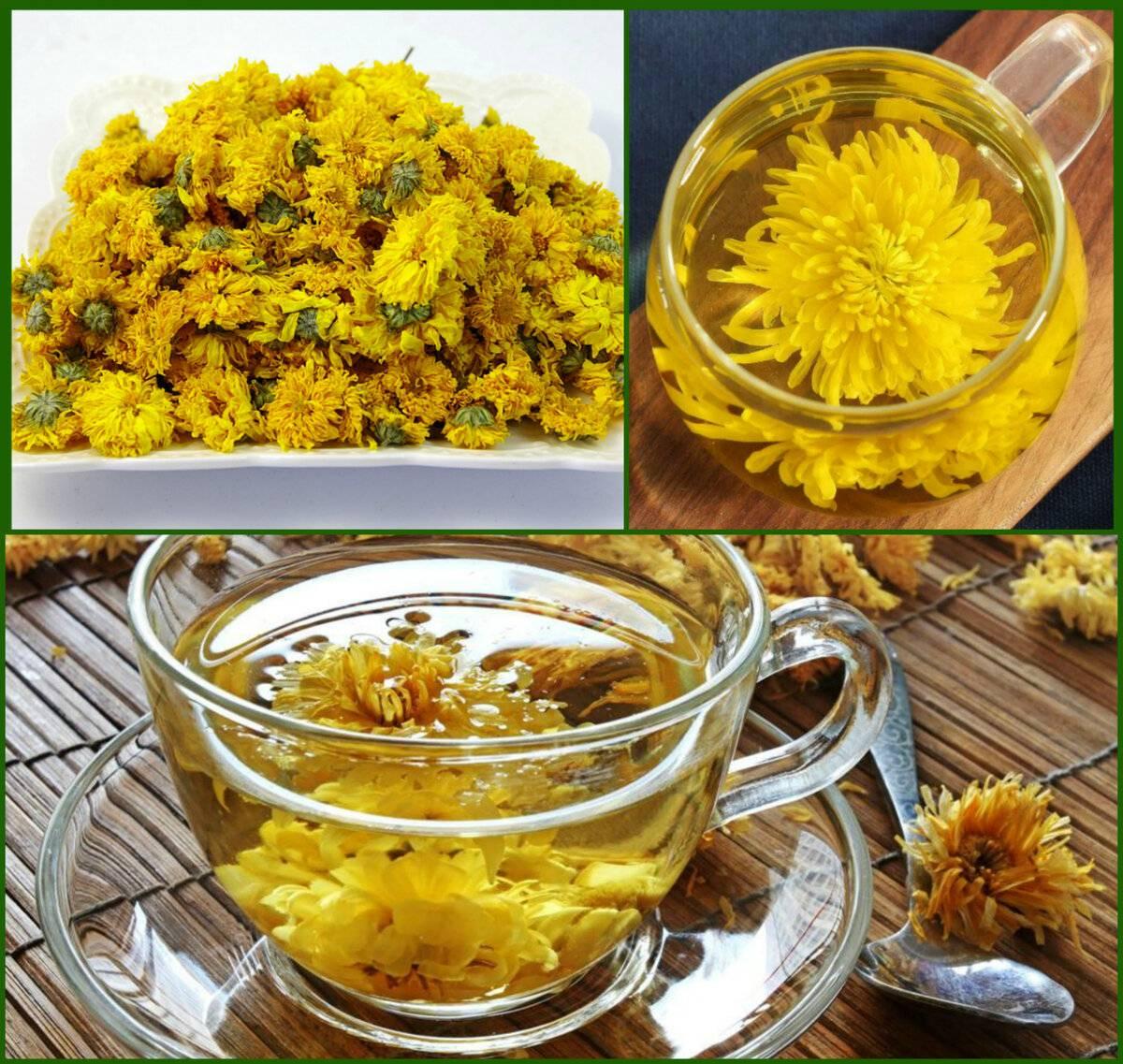 Чай из хризантемы: польза и вред, рецепты заваривания