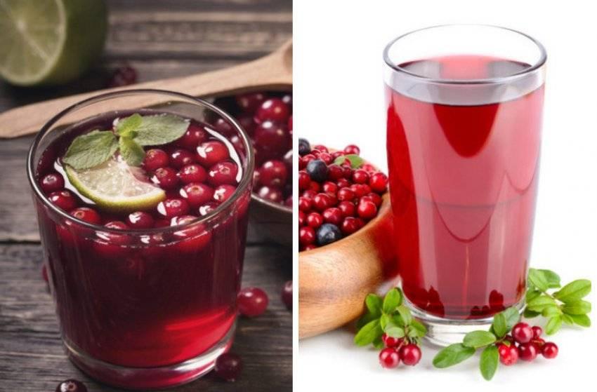 Брусничная вода: рецепты приготовления, выбор ингредиентов, польза и вред, отзывы