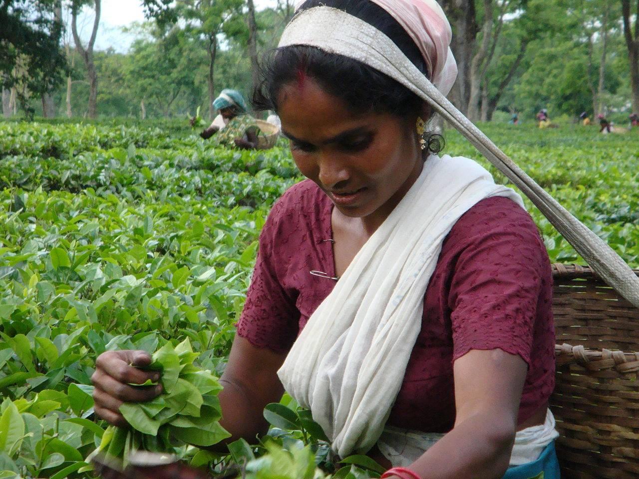 Как приготавливают индийский чай в индии