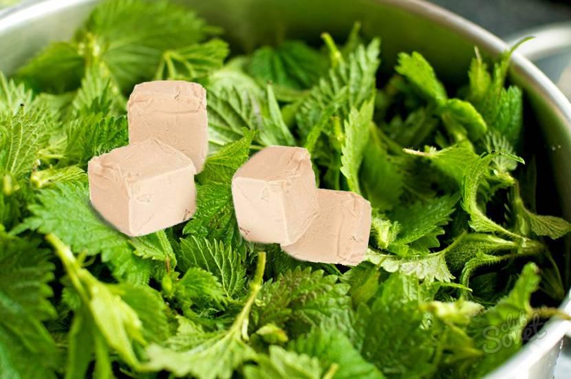 Чай из листьев крапивы: польза и вред для мужчин и женщин, лечебные свойства и противопоказания