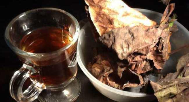 Чай из бадана (чигирский чай): полезные и лечебные свойства