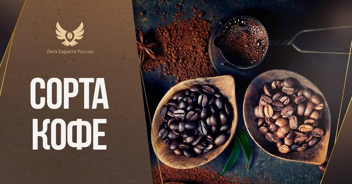 Арабика vs робуста: что нужно знать о самых популярных сортах кофе