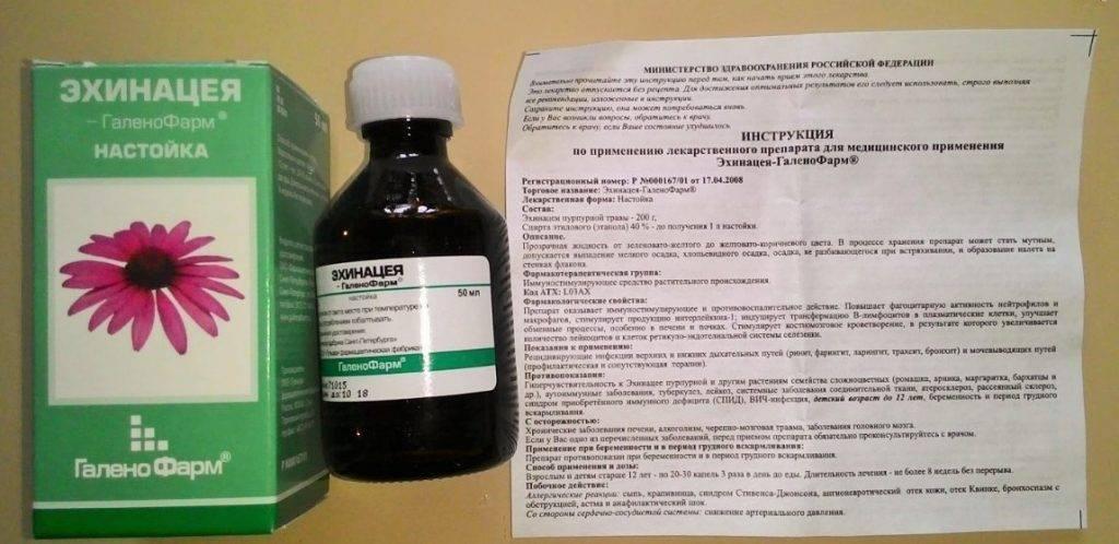 Эхинацея для иммунитета: свойства, показания, противопоказания, применение