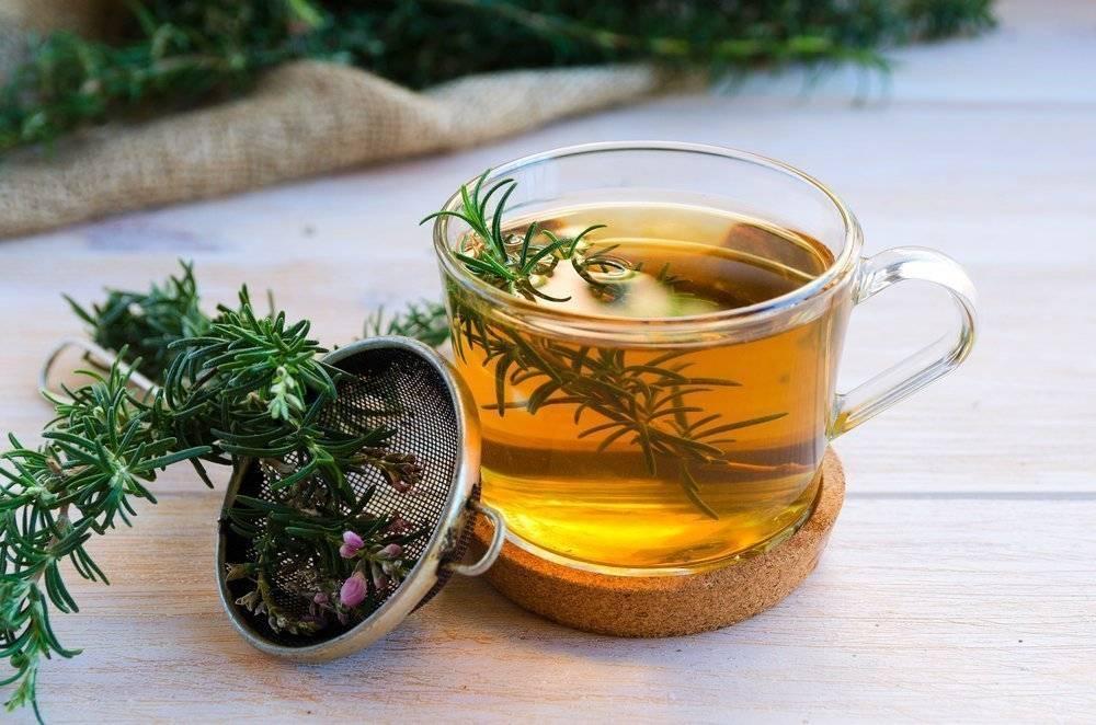 Таёжный чай из хвои - самоделкин друг