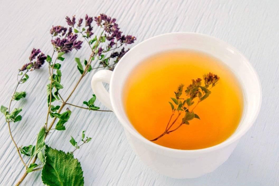 Польза чая с чабрецом