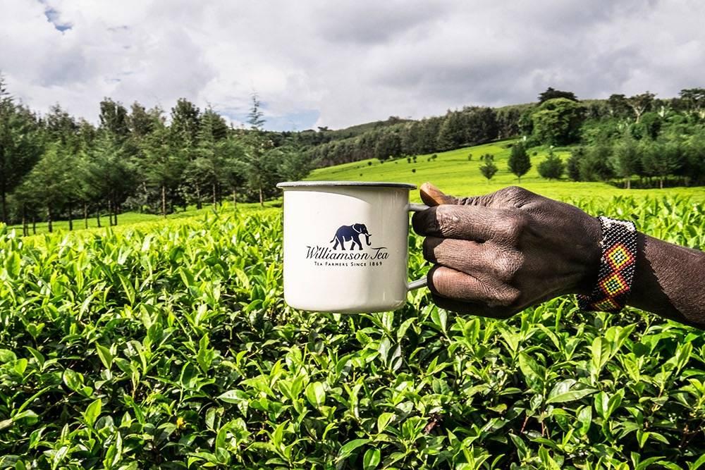 Как выбирать качественный черный чай в магазине?