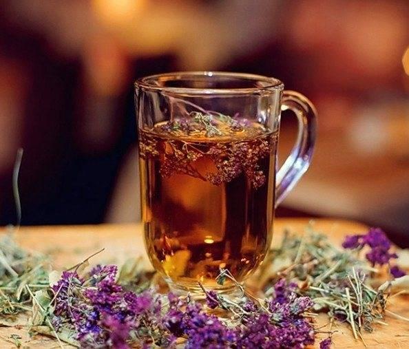 Чай с душицей: польза и вред для мужчин и женщин
