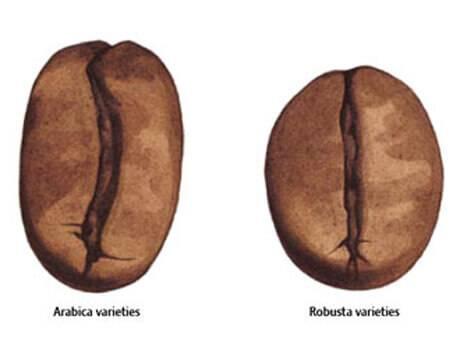 Отличия между арабикой и робустой