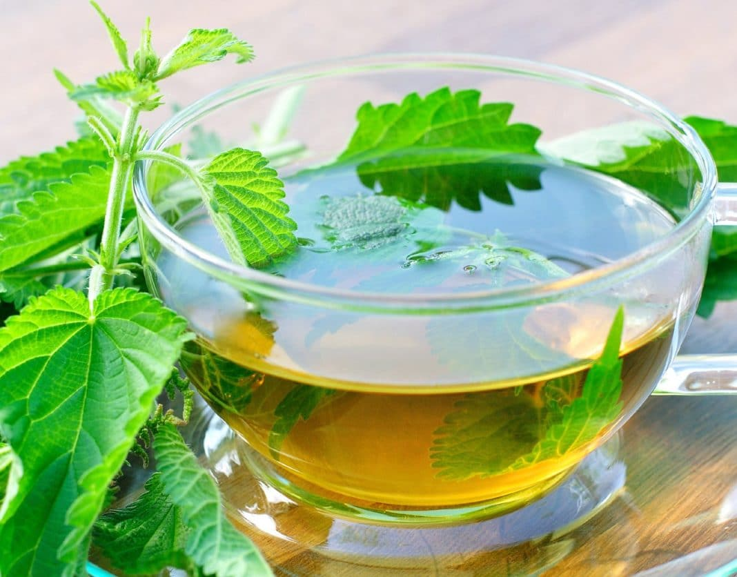 Березовый лист: полезные свойства, противопоказания, лечение