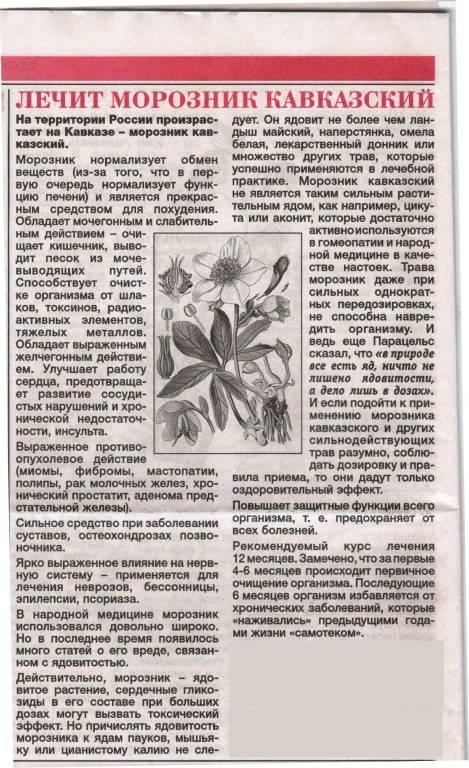 Морозник кавказский: свойства, инструкция по применению морозник кавказский