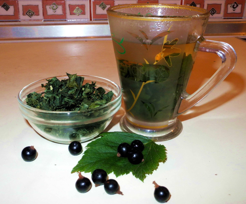 Оздоровись за чашечкой чая со смородиновыми листочками