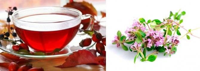 Чабрец при беременности: польза и вред чая и другие средства с чабрецом