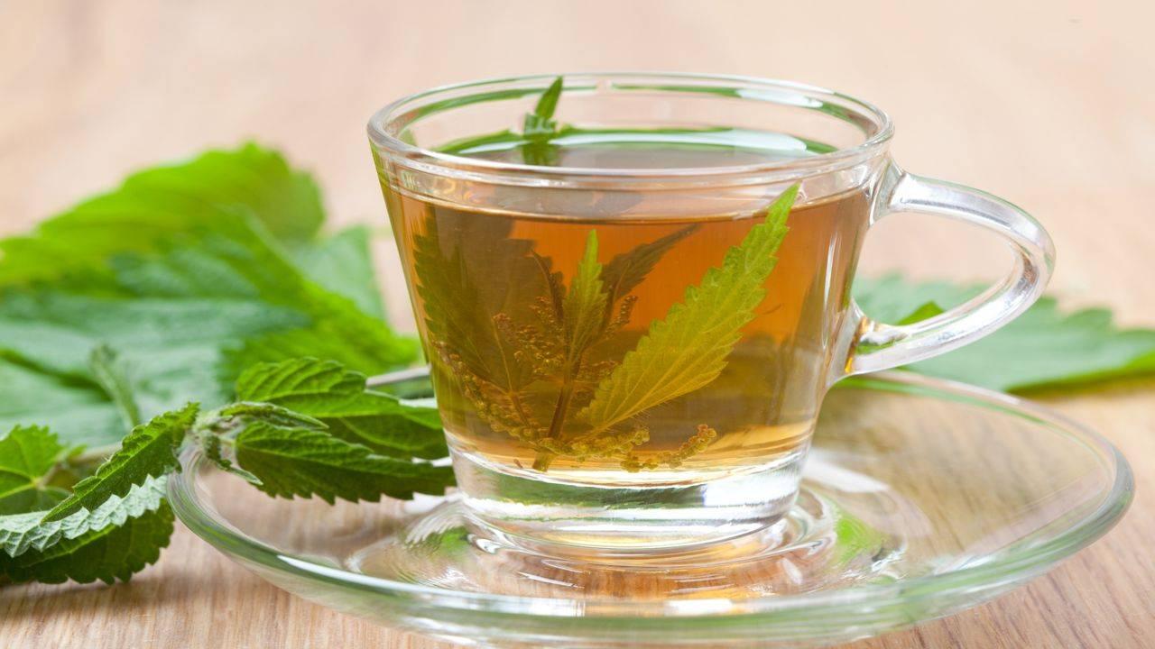 Отвар коры и листьев осины: рецепт приготовления, польза и вред | народная медицина