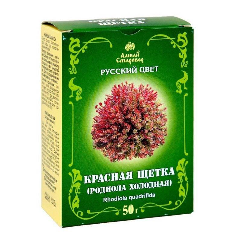 Красная щетка лечебные свойства и противопоказания, рецепты