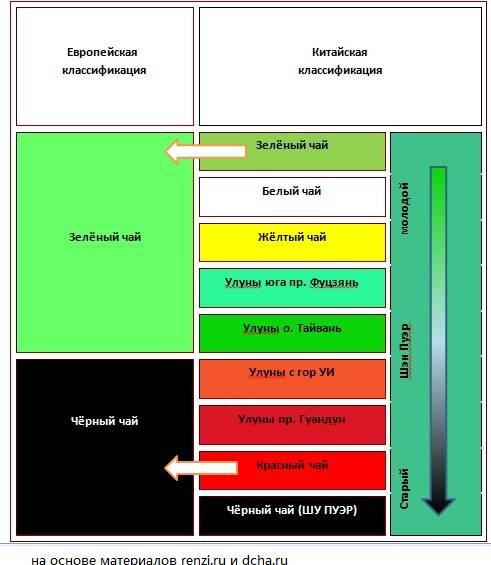 Зеленый чай лучше черного? 10 научных фактов