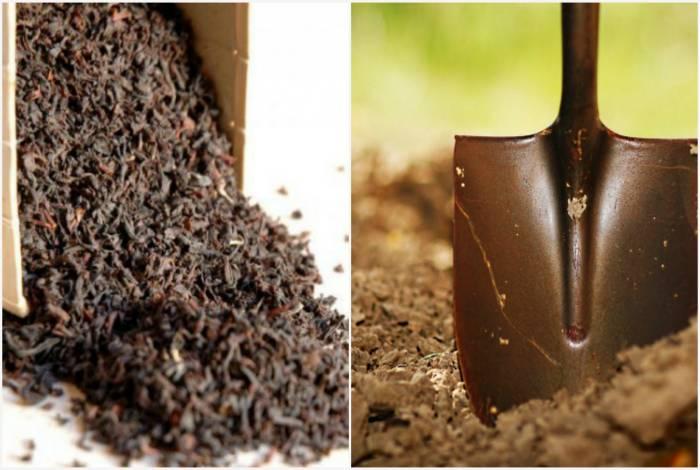 Чайная заварка как удобрение - чем полезна и cпособы применения
