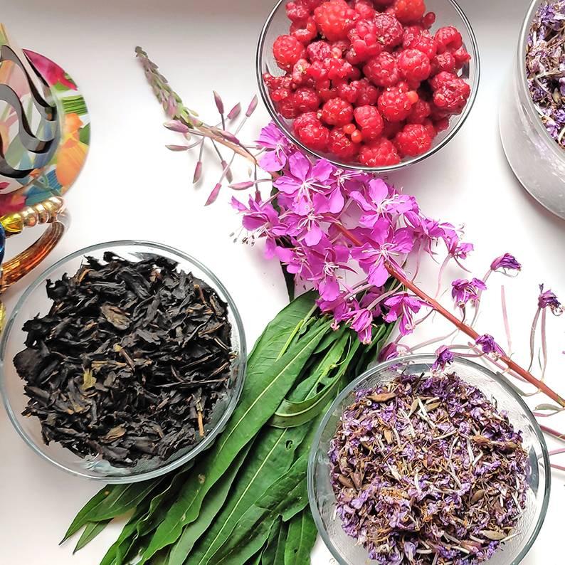 Заготовка иван-чая в домашних условиях: как собирать, ферментировать и сушить кипрей [7 ошибок и 12 способов сделать это правильно]