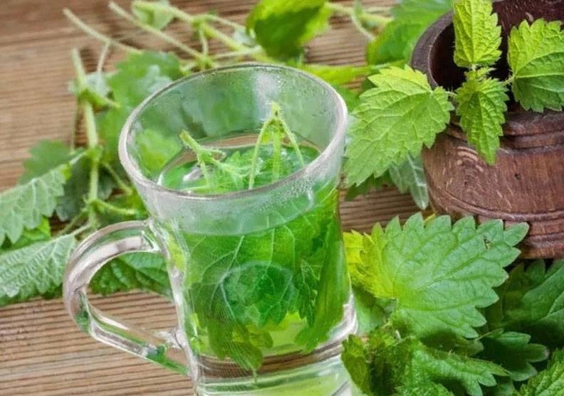 Чай из крапивы польза и вред