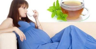 Мята при беременности: все заи против
