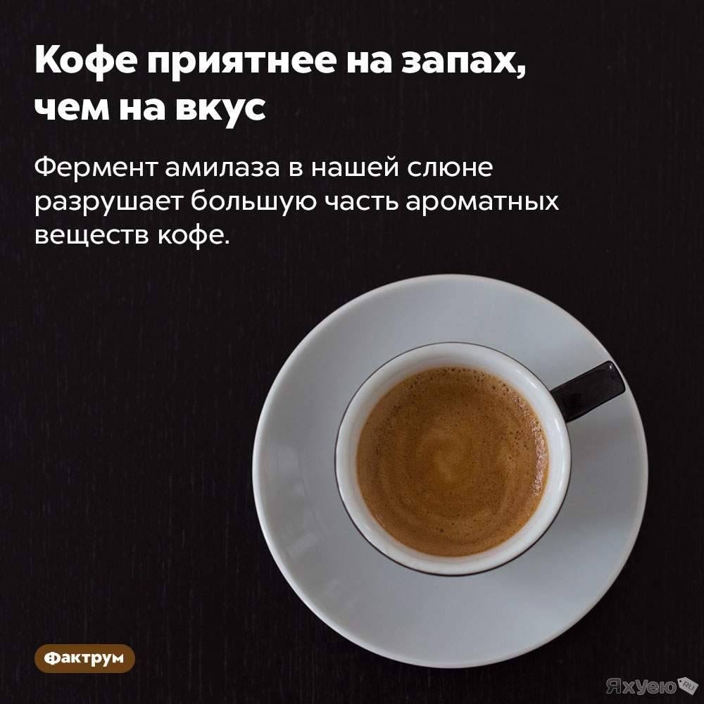 Интересные факты о кофе, полезные и вредные свойства – удивительные факты