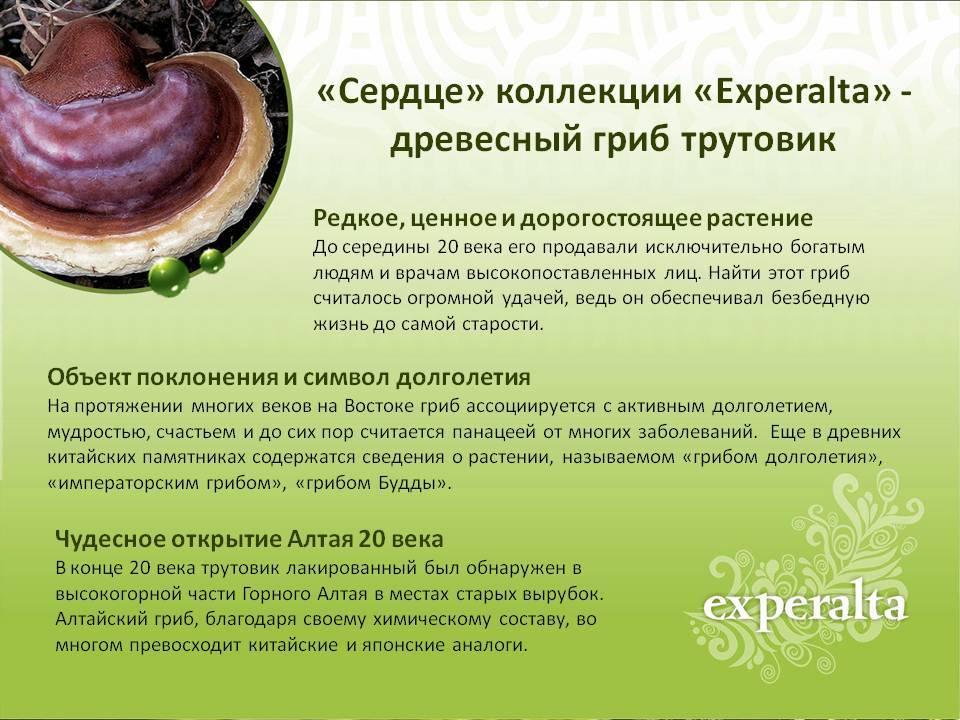 Гриб долголетия рейши лечение грибом рейши