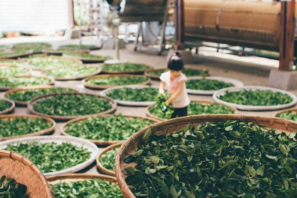 Какие нужны документы для производства иван чая. пакетированный чай с натуральными травами как бизнес. где доставать сырье