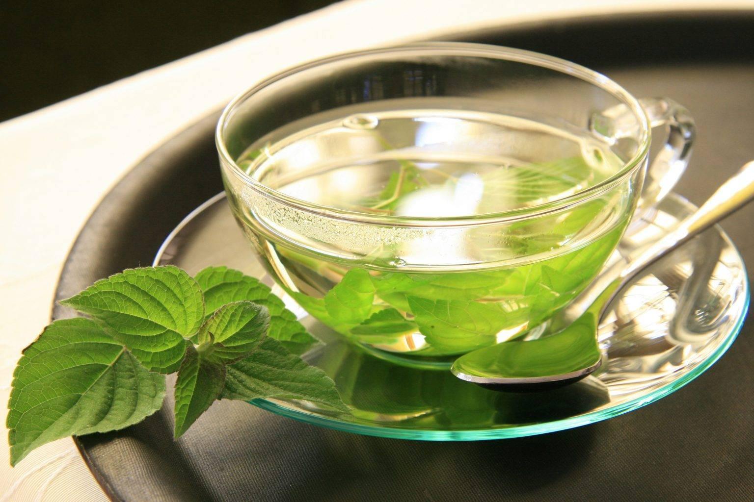 Зеленый чай с мятой польза и вред