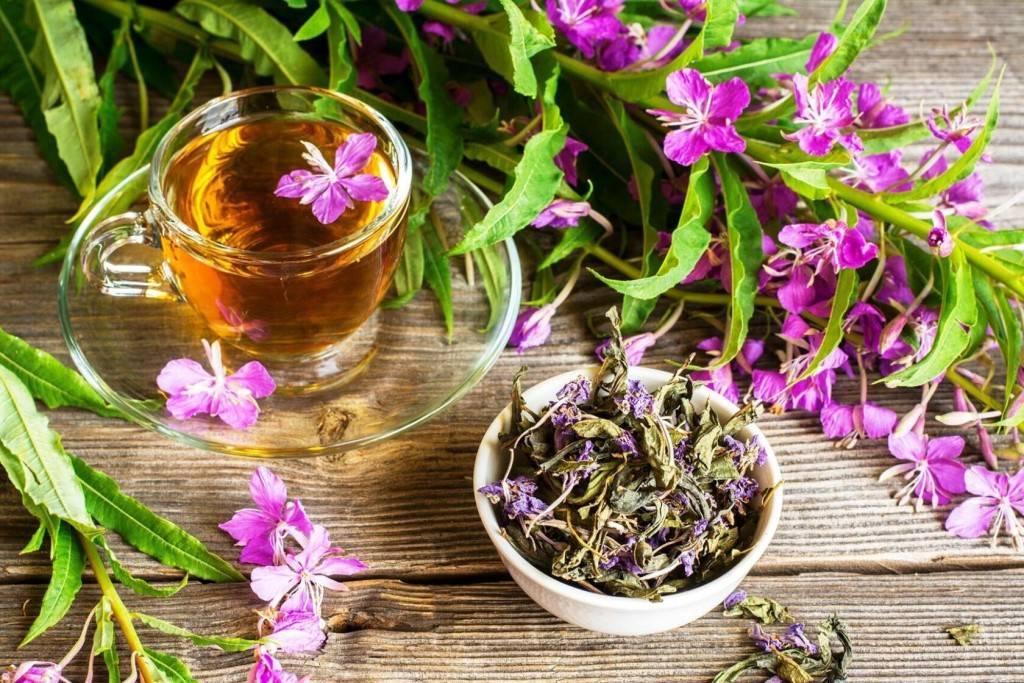 Как пить иван чай правильно: советы от специалистов