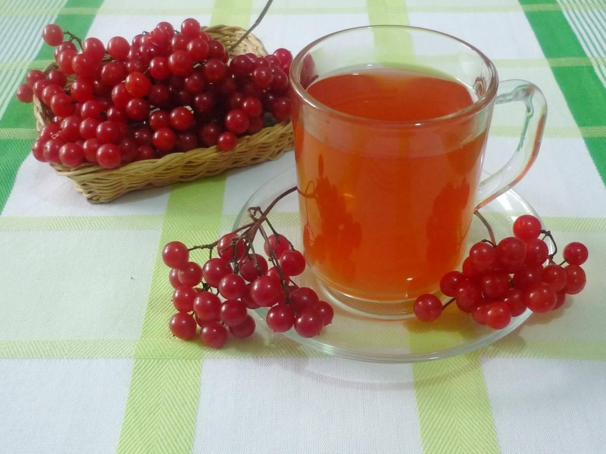 Чай с калиной: рецепты, польза и противопоказания