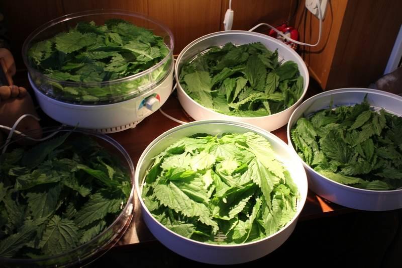 Сушение: 19 рецептов заготовок на зиму » сусеки