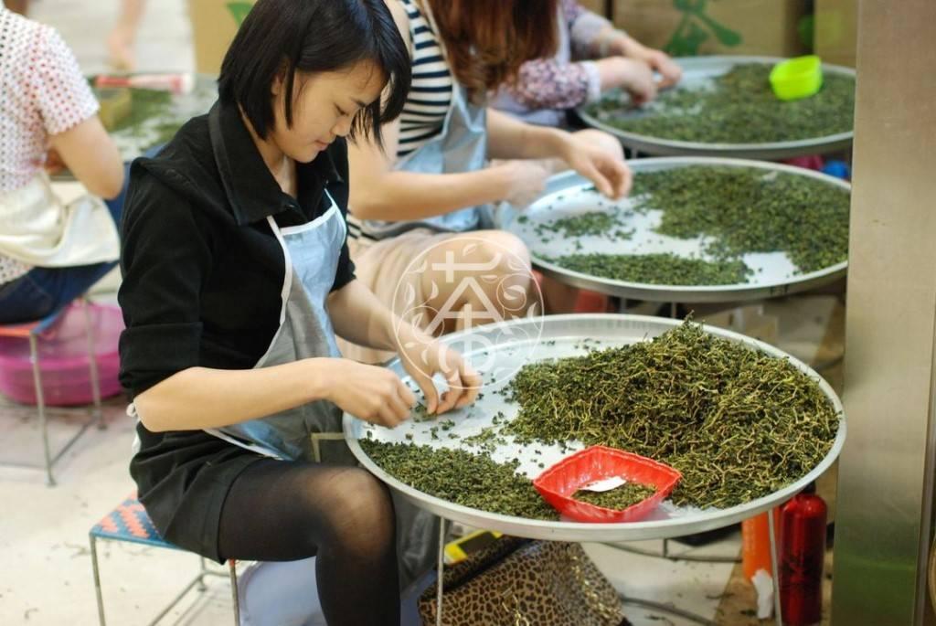 Как делают чай: процесс сбора, ферментации и сушка чая