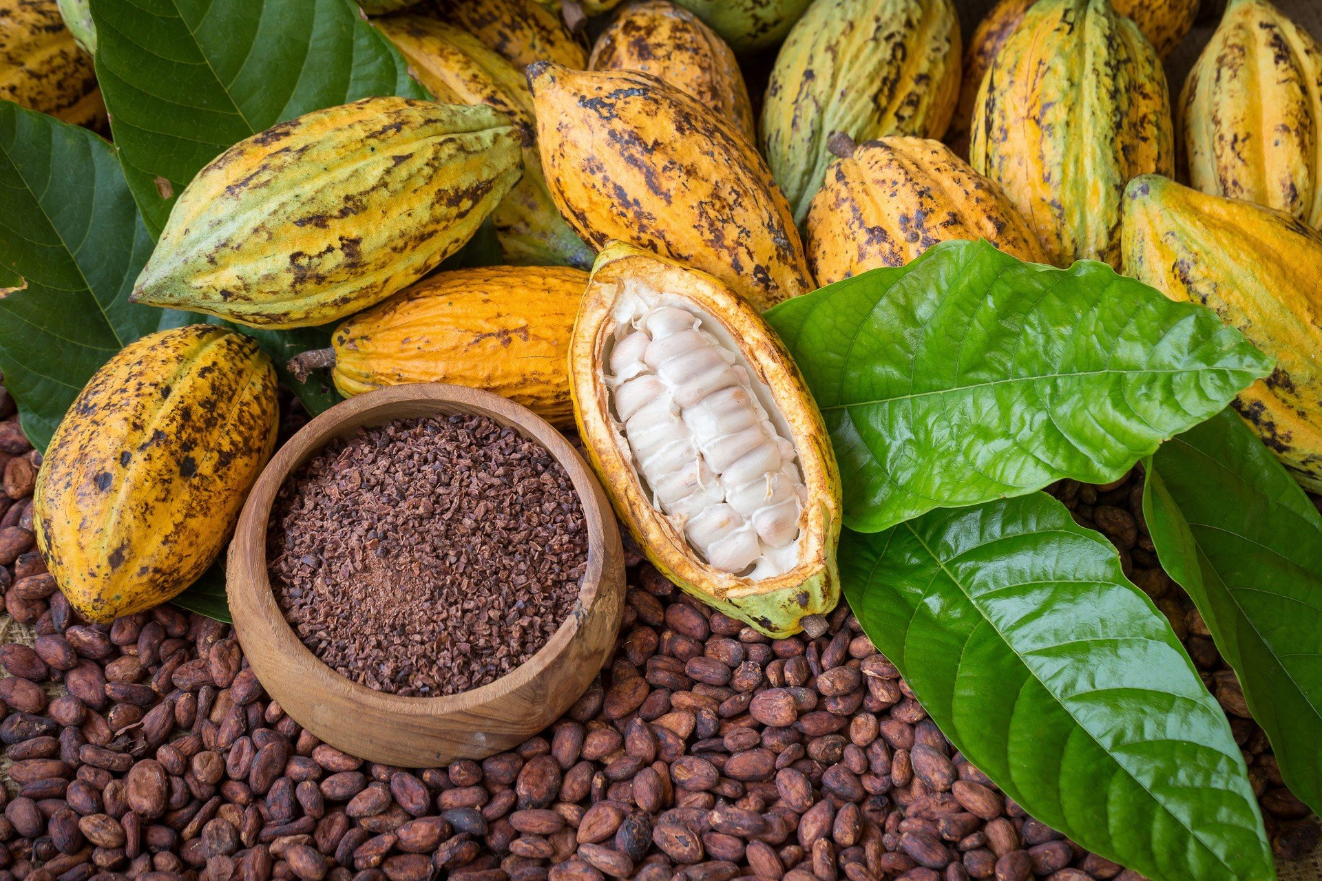 Дерево какао: описание, где растет и как выглядит