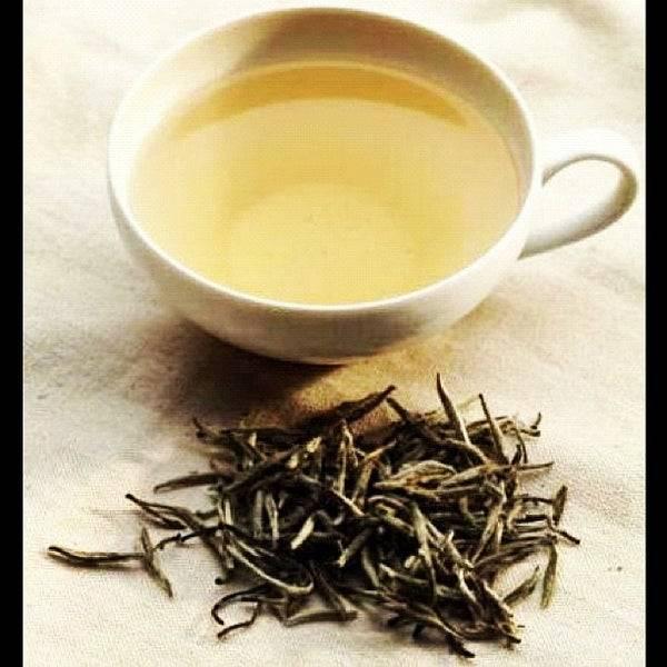 Полезные свойства белого чая, вред белого чая, как заваривать и чем он поможет организму
