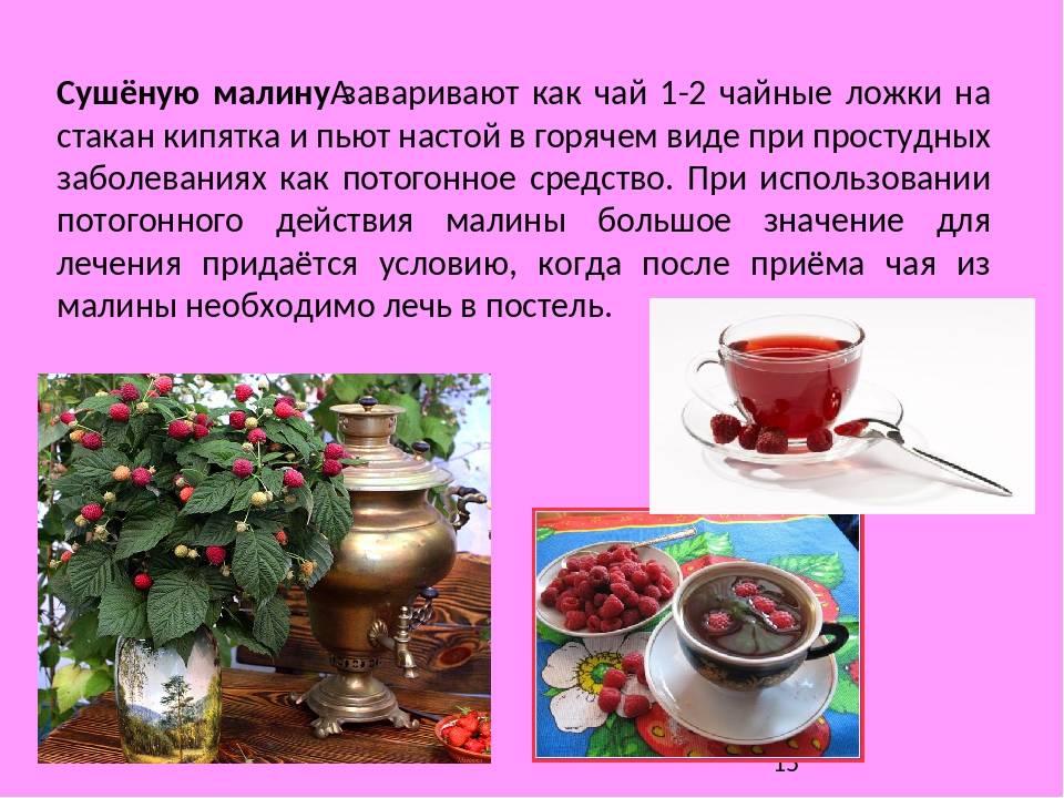 Малина при лечении простуды: полезные свойства и рецепты приготовления