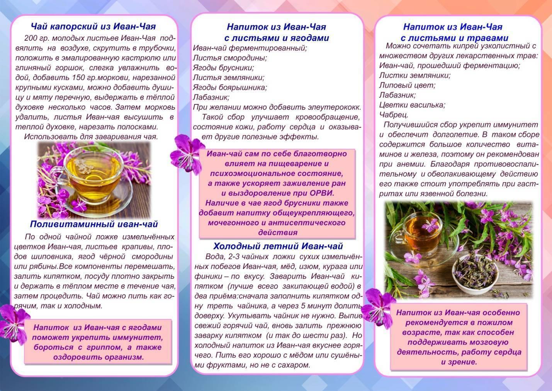 Как заваривать иван-чай правильно - вкусный и полезный копорский чай | здоровье в дом