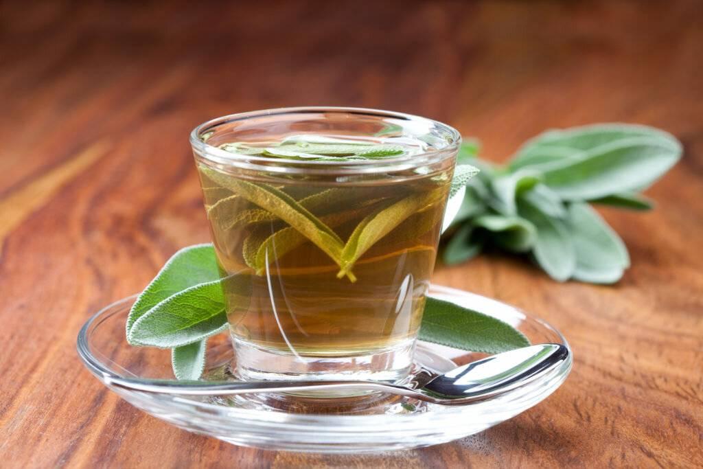 Чай с шалфеем: лечебные свойства и противопоказания