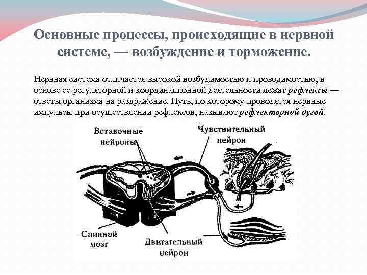 Как кофе влияет на мозг — 6 научных фактов о том, как он действует на кровоснабжение сосудов головы и полезно ли оно для улучшения умственной работы
