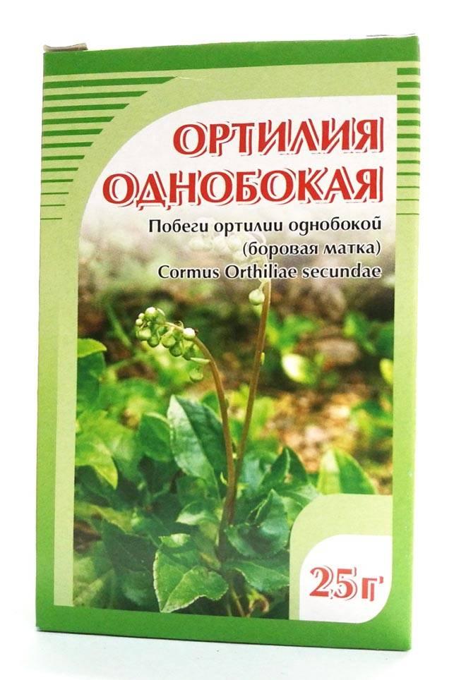 Трава матка боровая — лечебные свойства и противопоказания