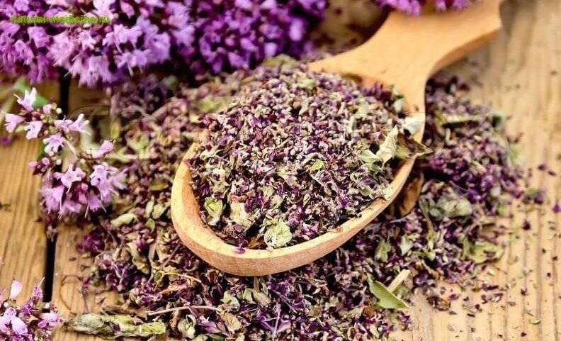 Полезные свойства чая с чабрецом, противопоказания и рецепты приготовления