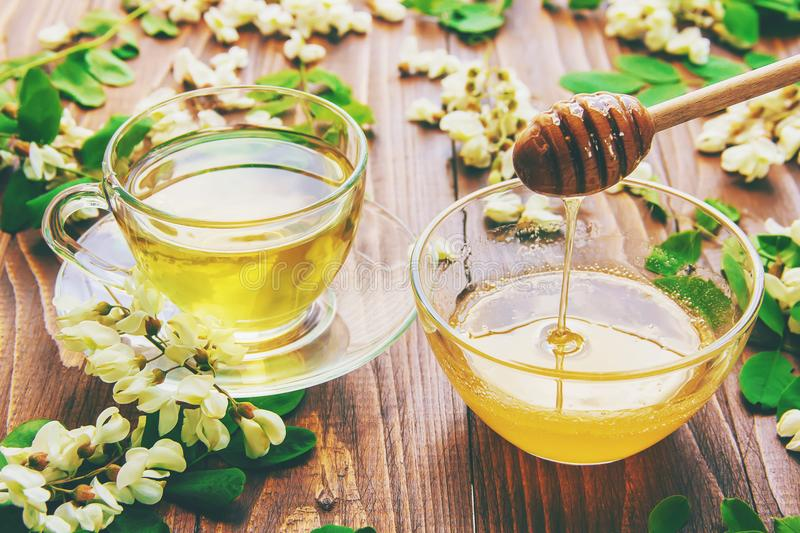 Белая акация: лечебные свойства и рецепты чая и отваров