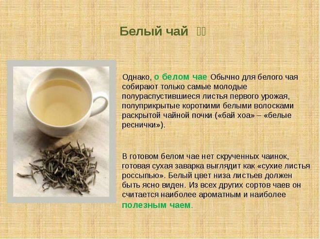 Белый чай - польза и вред. особенности заваривания