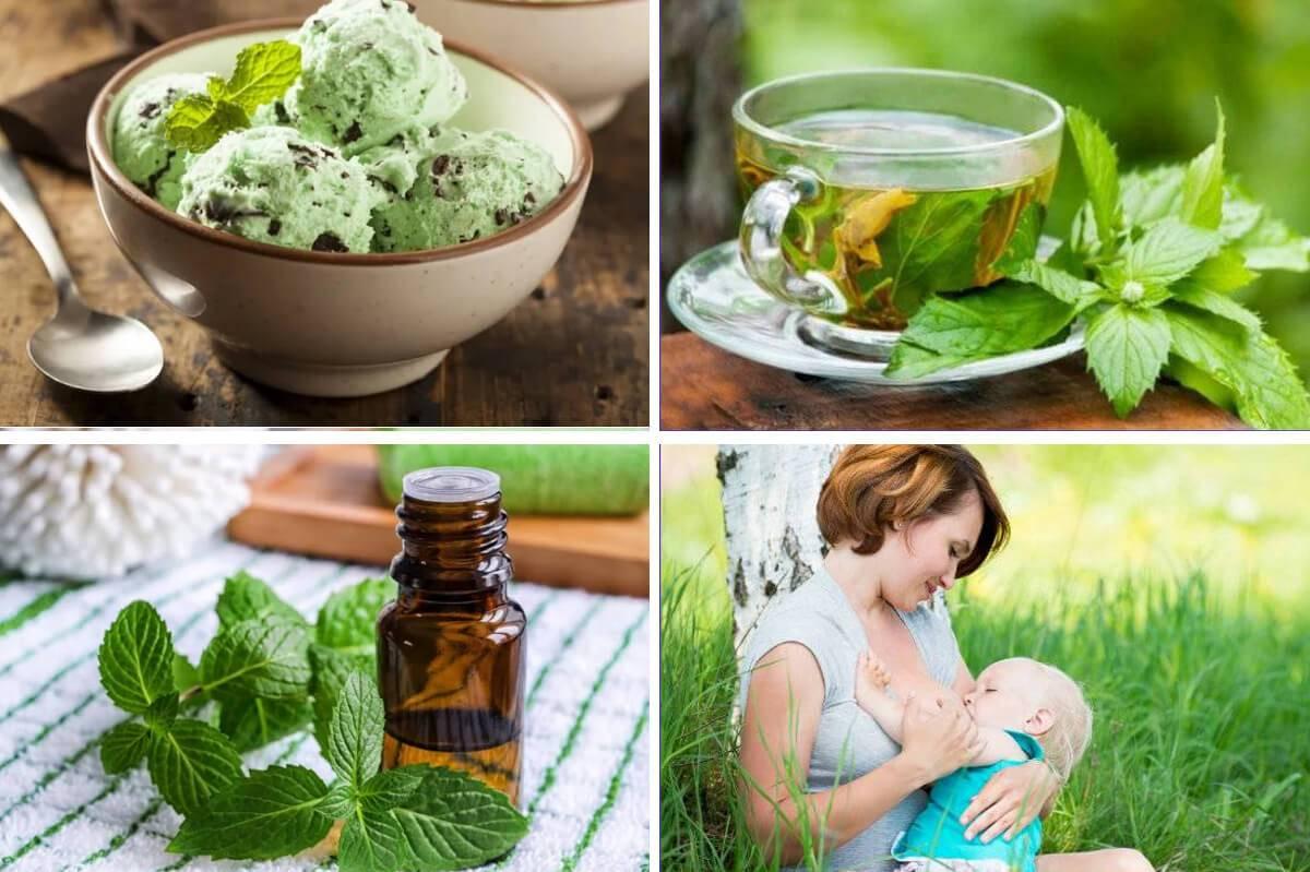 Польза и вред чая с мятой для организма человека | польза и вред